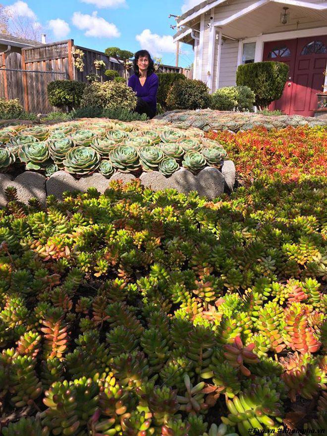 Vườn hoa sen đá hàng nghìn cây đáng ngưỡng mộ của mẹ Việt sau 7 năm trồng hoa xứ người - 2