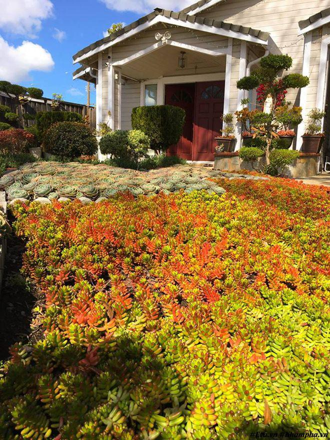 Vườn hoa sen đá hàng nghìn cây đáng ngưỡng mộ của mẹ Việt sau 7 năm trồng hoa xứ người - 5