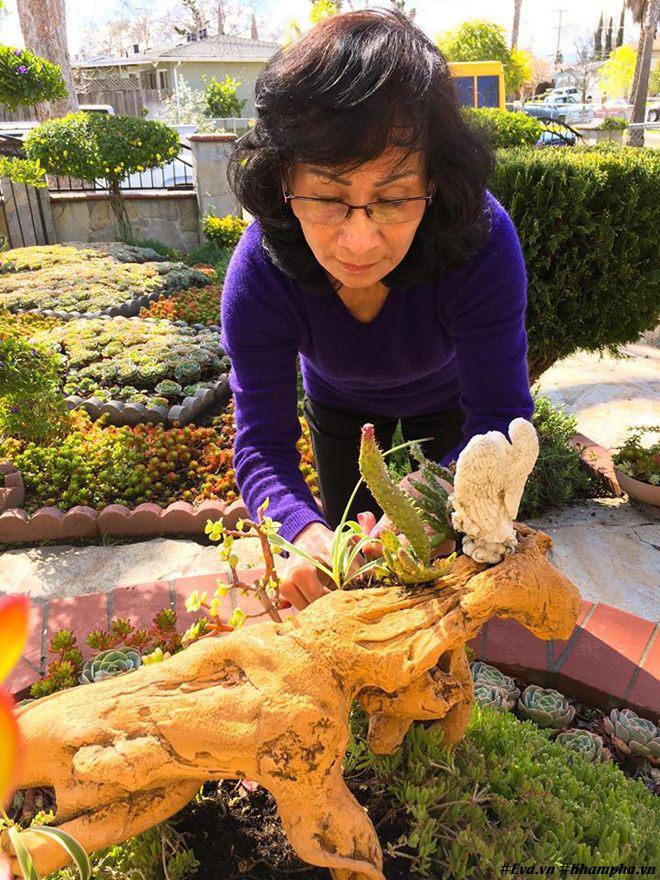 Vườn hoa sen đá hàng nghìn cây đáng ngưỡng mộ của mẹ Việt sau 7 năm trồng hoa xứ người - 9