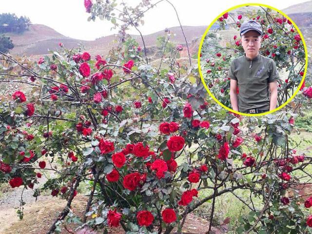 Câu chuyện buồn của cậu bé chăm cây hồng quý 10 năm, bị kẻ xấu vào tận sân đào trộm