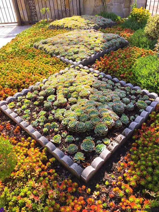 Vườn hoa sen đá hàng nghìn cây đáng ngưỡng mộ của mẹ Việt sau 7 năm trồng hoa xứ người - 4
