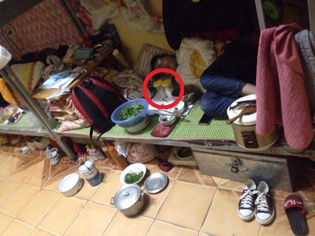 Dân mạng choáng với cảnh cô gái ngủ cùng... lọ đựng gia vị, bát đũa, rổ rá trên giường KTX