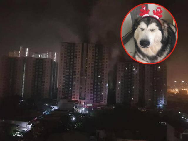 Chú chó xả thân cứu cả gia đình chủ thoát chết trong vụ cháy chung cư Carina Plaza