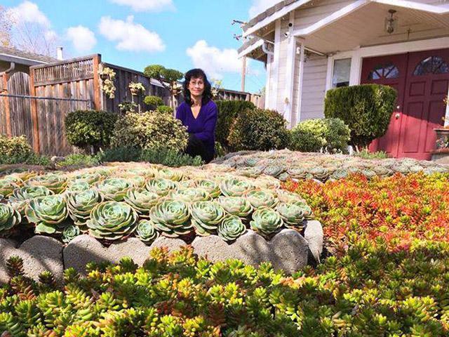 Vườn hoa sen đá hàng nghìn cây đáng ngưỡng mộ của mẹ Việt sau 7 năm trồng hoa xứ người