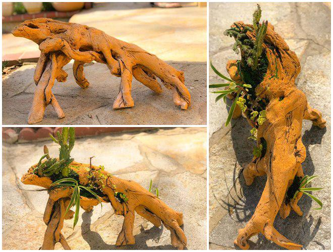 Vườn hoa sen đá hàng nghìn cây đáng ngưỡng mộ của mẹ Việt sau 7 năm trồng hoa xứ người - 10