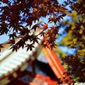 Xem & Đọc - Lộ trình khám phá cho người lần đầu tới Tokyo