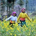 Xem & Đọc - Mê mẩn vẻ đẹp cao nguyên Đồng Cao