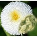 Làm mẹ - Sự tích hoa Cúc trắng