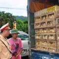 Mua sắm - Giá cả - 4 tháng, bắt giữ hơn 128 tấn gà nhập lậu