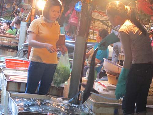 Lấy 10 mẫu cá tầm kiểm tra chất tăng trọng - 1