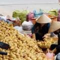 Mua sắm - Giá cả - Đà Lạt: Đồng loạt kiểm tra khoai tây TQ