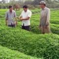 Mua sắm - Giá cả - Vì đâu nông sản an toàn không có đất sống?