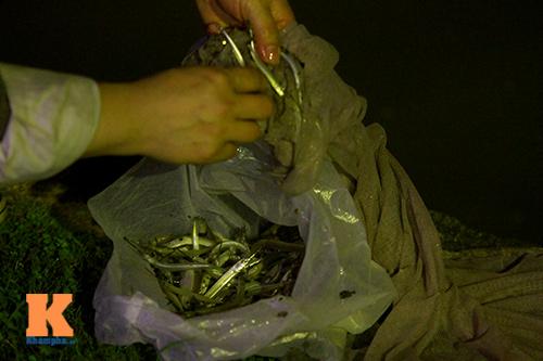 HN: Săn cá kìm kiếm gần chục triệu mỗi tháng-4