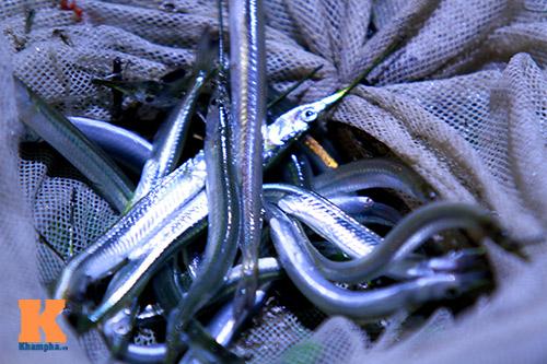 HN: Săn cá kìm kiếm gần chục triệu mỗi tháng-3
