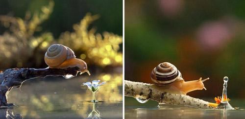 Đẹp mỹ mãn bộ ảnh tình yêu ốc sên-11