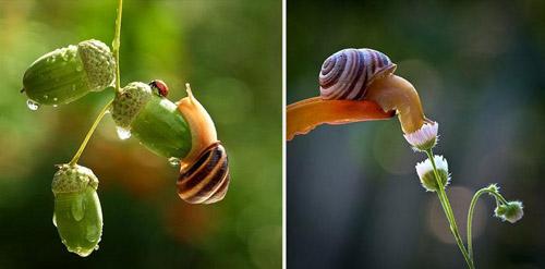 Đẹp mỹ mãn bộ ảnh tình yêu ốc sên-12
