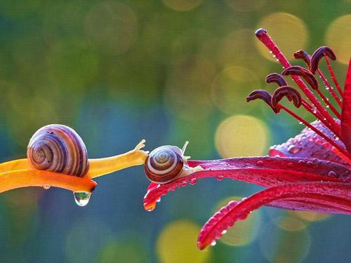 Đẹp mỹ mãn bộ ảnh tình yêu ốc sên-2