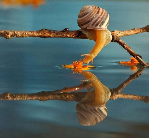 Đẹp mỹ mãn bộ ảnh tình yêu ốc sên-4