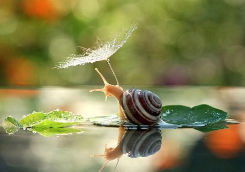 Đẹp mỹ mãn bộ ảnh tình yêu ốc sên-9
