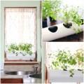 Nhà đẹp - Biến ống nhựa thành vườn rau trong bếp
