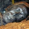 Tin tức - Bí ẩn 2 xác ướp nổi tiếng thời Lý Việt Nam