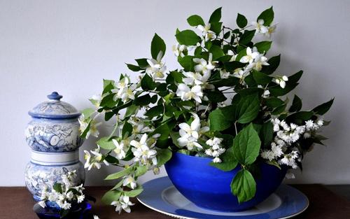hoa canh phong ngu giup ban ngon giac - 1
