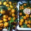 """Mua sắm - Giá cả - Gần 300 tấn trái cây TQ dính độc """"lạc"""" vào Việt Nam"""