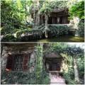 Nhà đẹp - Nhà phủ kín dây leo kỳ lạ ở Hà Nội