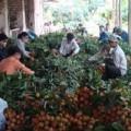 Mua sắm - Giá cả - Doanh nghiệp Việt điều tiết lại thị trường