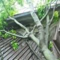 Tin tức - Gió lốc, cây đổ khiến 2 mẹ con tử vong