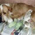 Tin tức - Kỳ lạ 2 chú chó sơ sinh có màu xanh lá