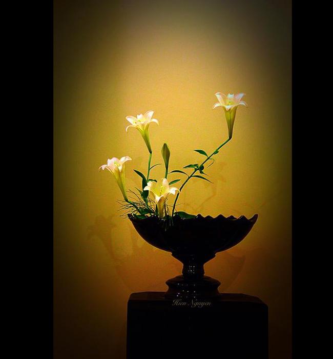 Chị Hiền với bình hoa loa kèn vươn mình giống như những ngọn nến trong đêm