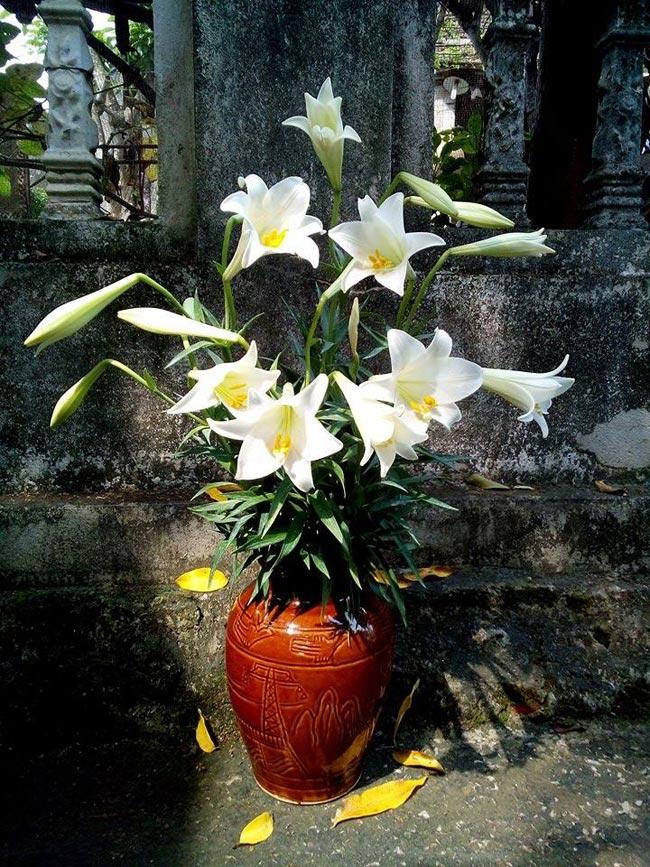Bình hoa loa kèn của chị Trần Phan Thanh Hoa.