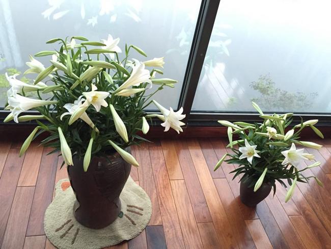 Bình hoa lớn và bình hoa nhỏ do ông xã chị Mộc Lan (Tây Hồ, Hà Nội) trổ tài.