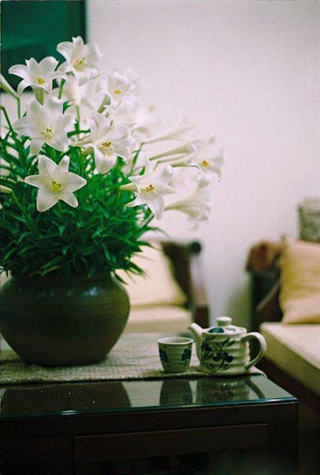 Những bình hoa loa kèn của chị Zeta nhận được khá nhiều sự quan tâm của những người yêu hoa trên mạng.