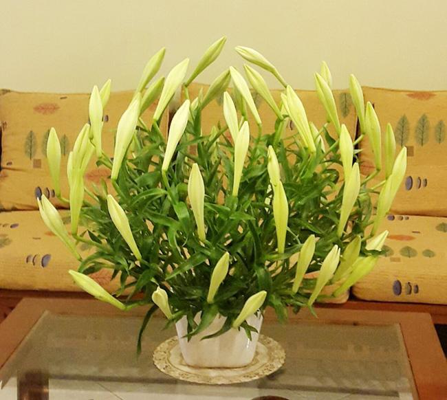 Bình hoa loa kèn ngược của chị Lương Việt Hoa được nhiều chị em yêu thích và hỏi cách cắm.