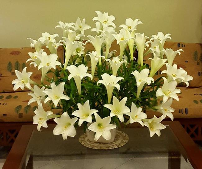 Để cắm bình hoa ngược thì quan trọng nhất là chọn mua hoa. Bạn nênchọn hoa bông một vì chúng sẽ có độ cong gần như nhau.Trước tiên cắm định hình những bông thấp phía dưới cho cân. Tiếp theo cắm tiếpnhững bông ở giữa, rồi sau cùng là những bông ở lưng chừng. Vấn đề là cố gắng chọn các bông cong gần như nhau cho đối xứng vậy sẽ cân đều.