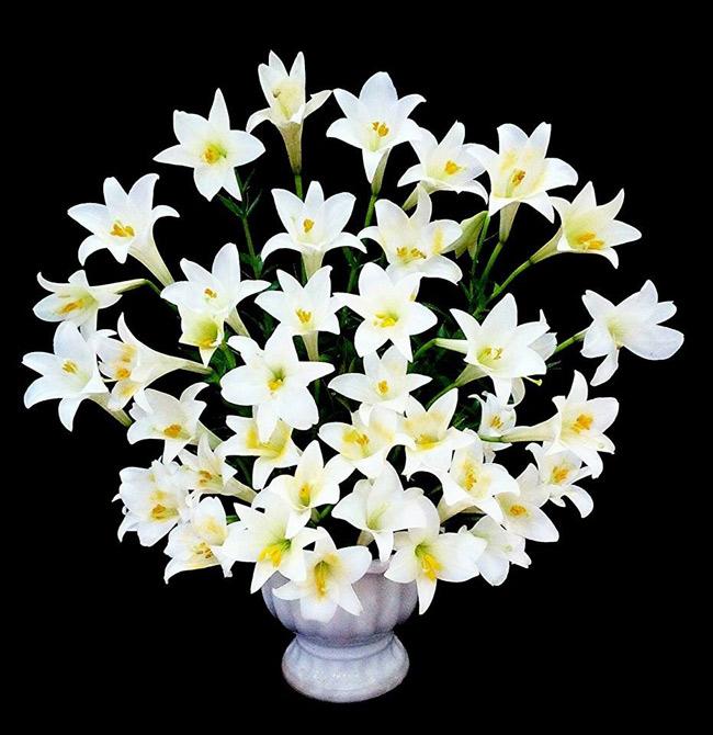 Loa kèn chỉ nở rộ một mùa trong năm. Trong những ngày loa kèn đang vươn mình kiêu hãnh nhất, chị Lựu cũng bày biện cho gia đình một bình hoa thật đẹp.