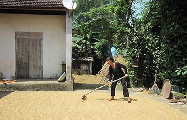 Sân trước thường được dùng để phơi thóc. Đây là nơi Phượng và anh trai hồi còn nhỏ đá bóng rơm với nhau.