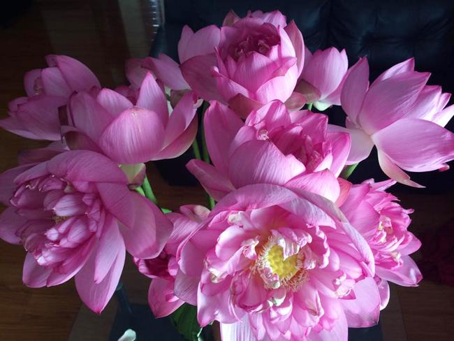 Cách cắm hoa sen rực rỡ đón hè sang