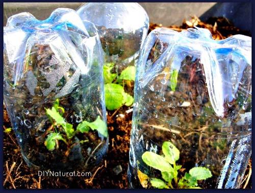 """Chai nhựa - """"trợ thủ đắc lực"""" bất ngờ trong vườn-5"""