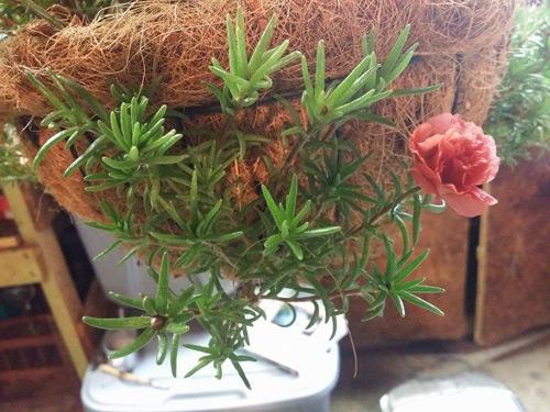 mach nho cach trong va cham hoa muoi gio no dep, sai hoa - 6