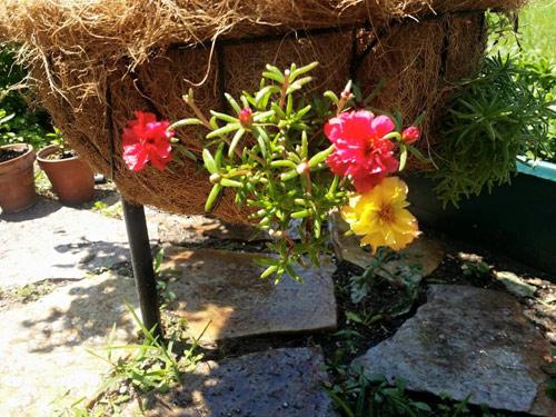 mach nho cach trong va cham hoa muoi gio no dep, sai hoa - 7