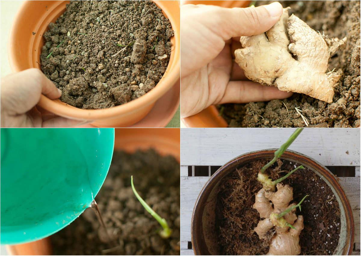 3 loại gia vị thiết yếu bạn nên tự trồng ngay hôm nay-2