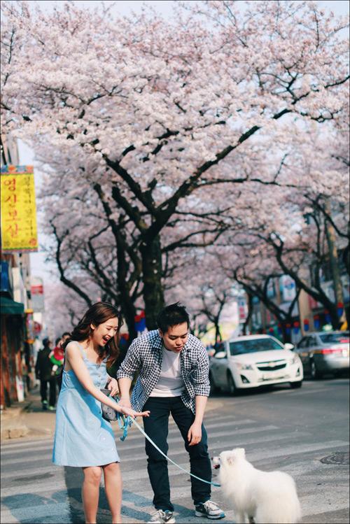 anh cuoi ngap sac hoa anh dao lang man nhu phim han quoc - 3