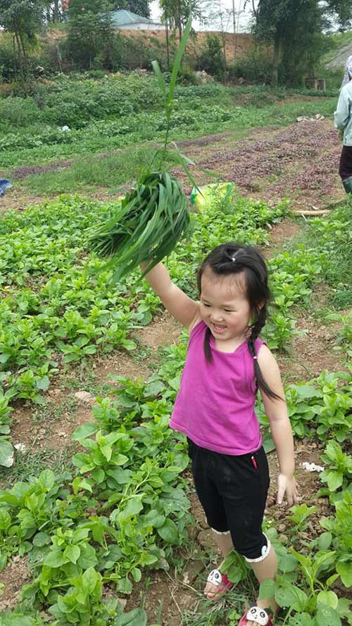 dang nguyen lan chi - ad11227 - toc may ma hong - 5