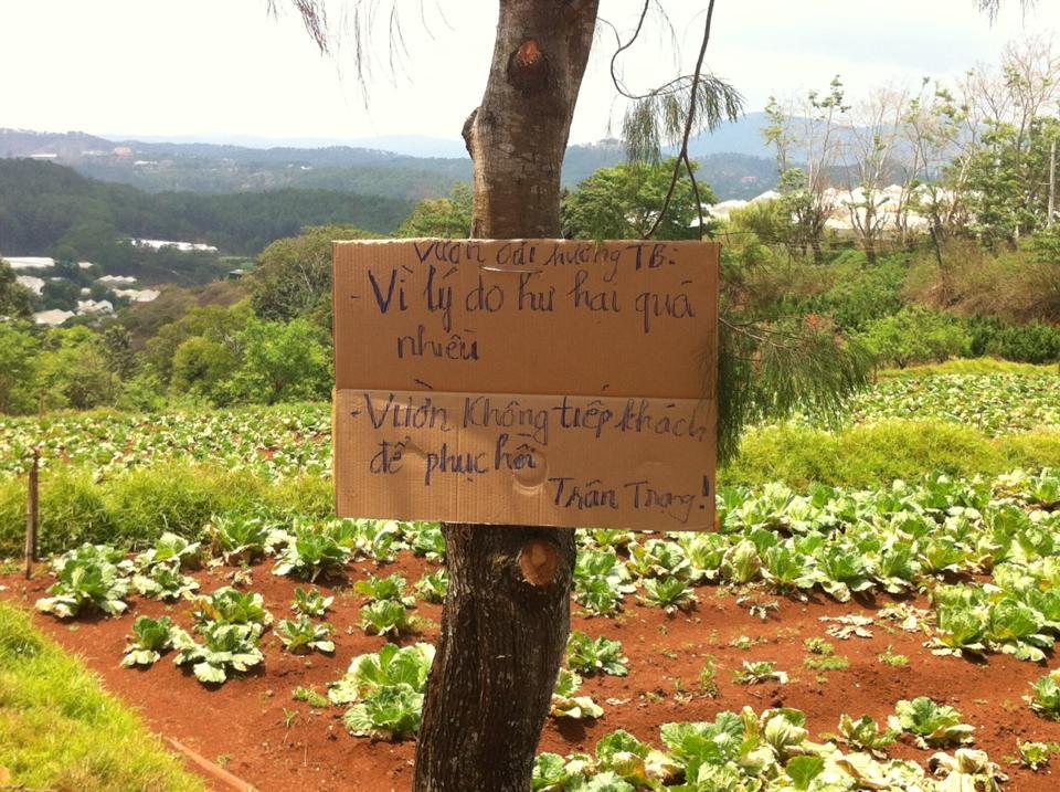 """Vườn oải hương ở Đà Lạt """"tan nát"""" bởi khách tham quan-10"""