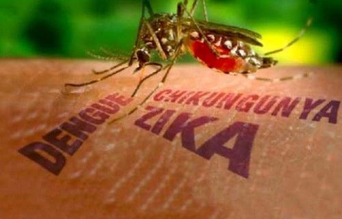 Việt Nam chính thức hết dịch do virus Zika-1