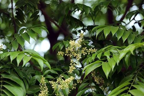 ha noi diu dang huong hoa sau dau ha - 6