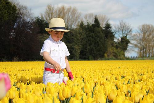 Hai thiên thần lai gốc Việt bên cánh đồng hoa Tulip đẹp như tranh-14